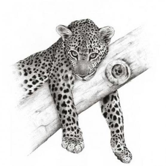 Come Up And See Me - Leopard