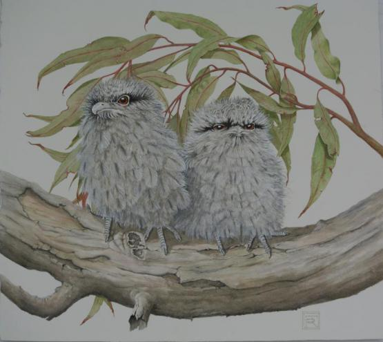 Frogmouths On Branch