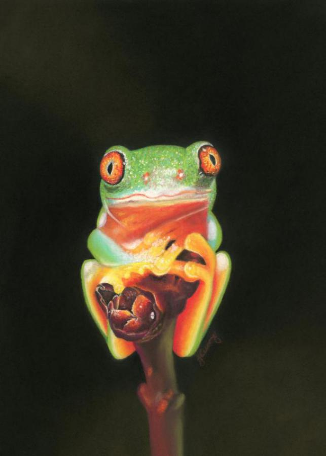 Insecurity (Red-eyed Green Tree Frog)