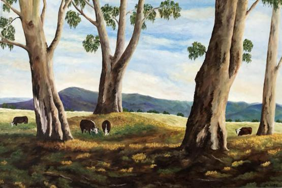 Cows Among Gum Trees