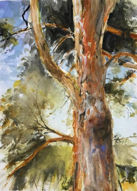 Old Gum Tree, Red Hill, Victoria