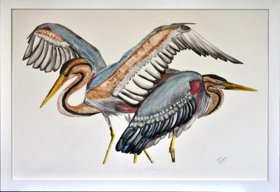 Pair Of Herons