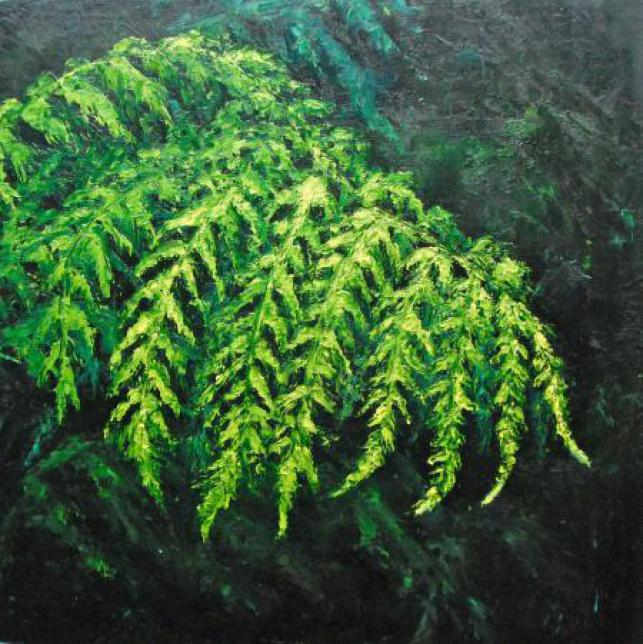 Tree Fern Triptych