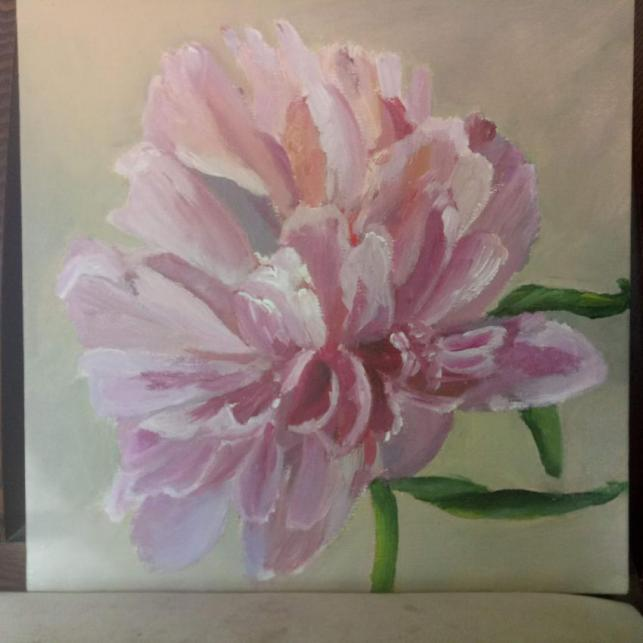 French peony rose Front